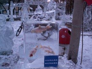 ホンモノの魚が氷の中に!